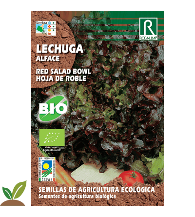 LECHUGA RED SALAD HOJA DE ROBLE