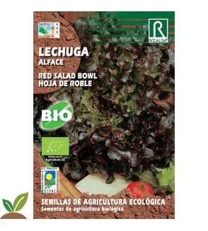 LECHUGA RED SALAD HOJA DE ROBLE ECO