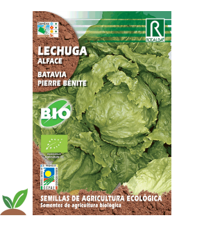 LECHUGA BATAVIA PIERRE BENITE ECO