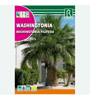 PALMERA WASHINGTONIA - SOBRE DE SEMILLAS 1G