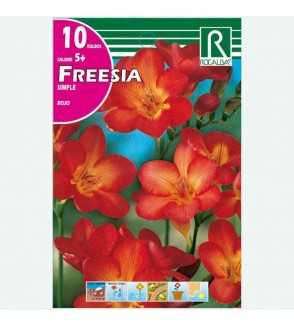 BULBO FREESIA SIMPLE ROJO - 10 UD