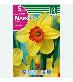 BULBO NARCISO TROMPETA HOLLYWOOD AMARILLO - 5 UD