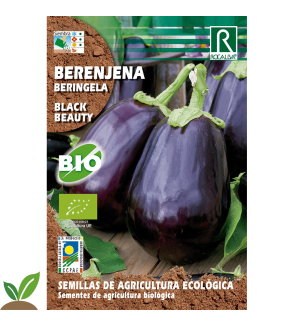 BERENJENA BLACK BEAUTY ECO